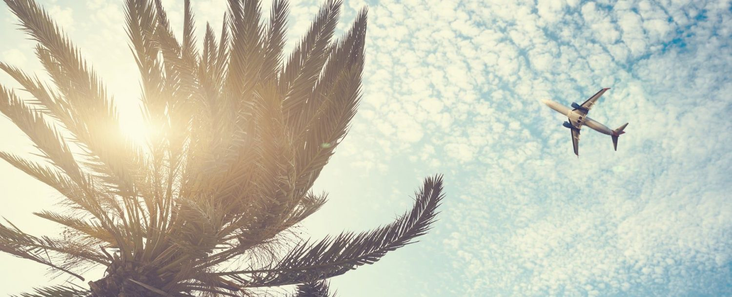 plane flying over palm tree